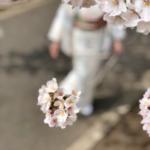 春の着付け教室 キモノワールドライフ 相模原市橋本